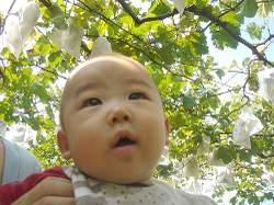 Grape2006_3